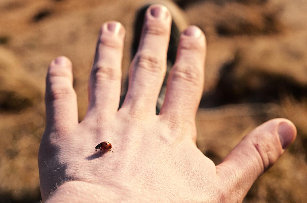 Lady bug friend