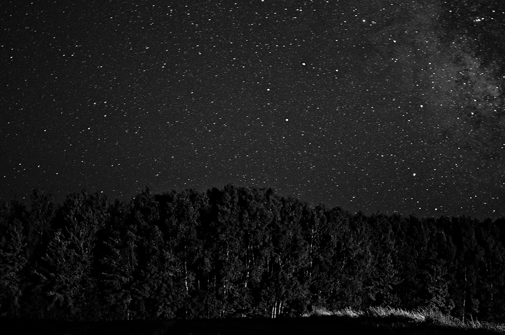 Tree Line and Stars